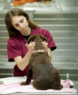 Emergency Care At Bush House Vets